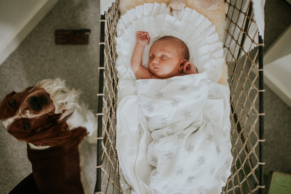 newborn in crib with dog watching over